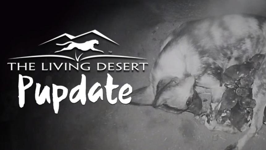 1-28-LIVING-DESERT-PUPDATE-GFX