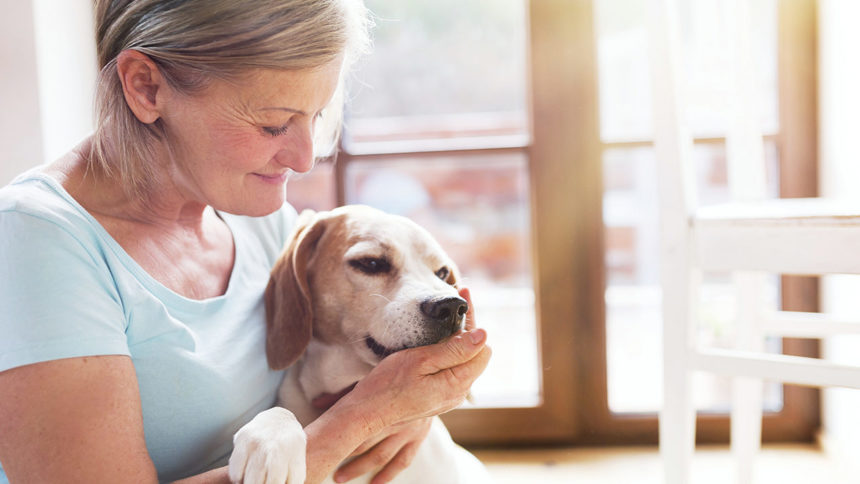 dog-with-owner-pets_1541435919938_17188647_ver1.0_1280_720