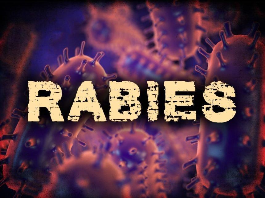 073120 Rabies 01