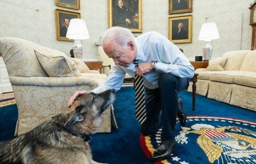 President Joe Biden pets the Biden family dog Champ in the Oval Office of the White House Wednesday