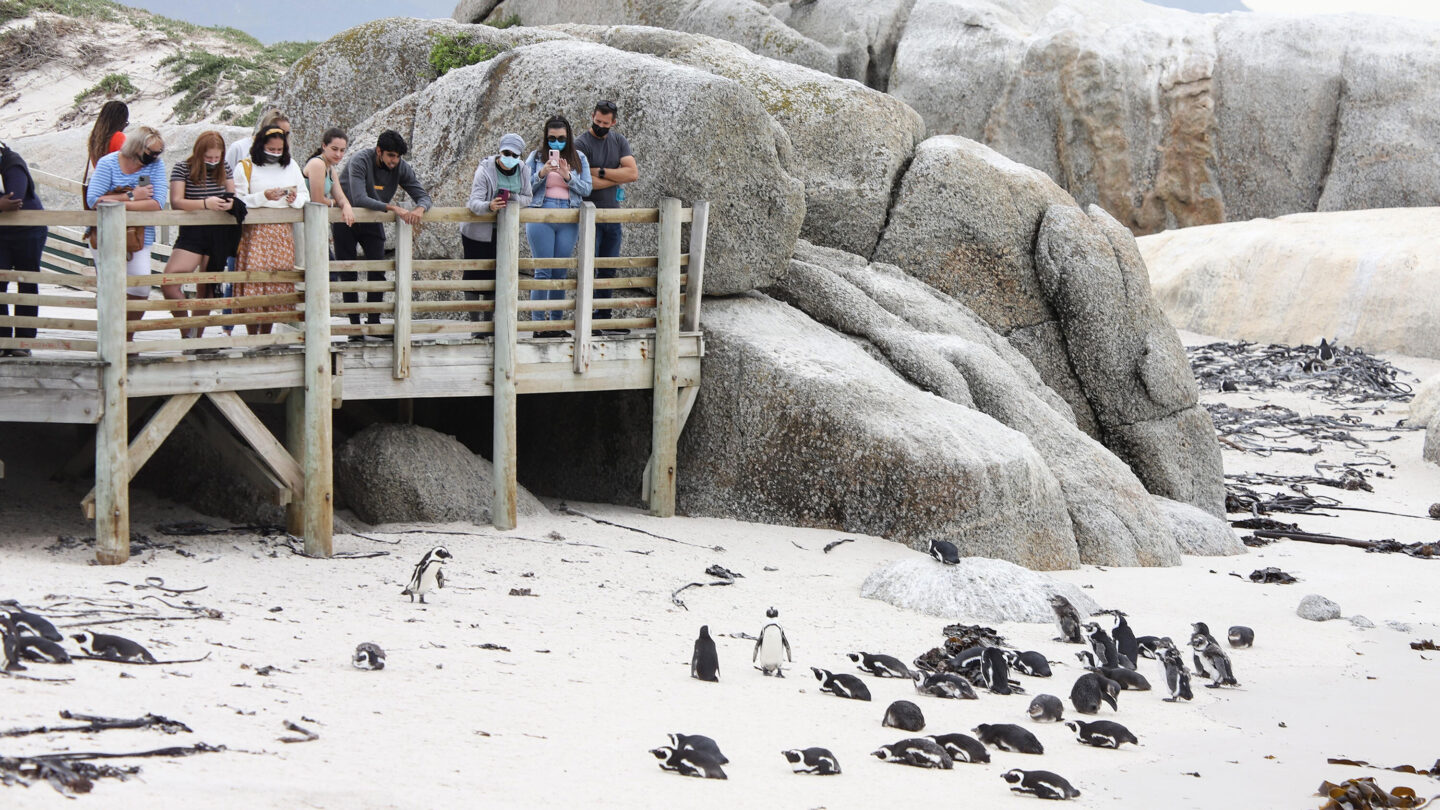 <i>Lyu Tianran/Xinhua/Getty Images</i><br/>The penguin colony is pictured here in Simonstown