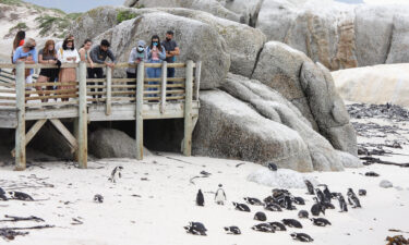 The penguin colony is pictured here in Simonstown
