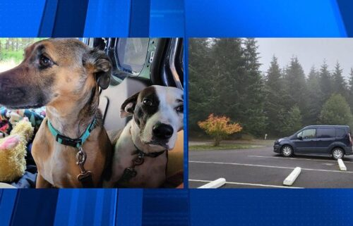 Two dogs inside a stolen van disappeared on October 17 iin Portland