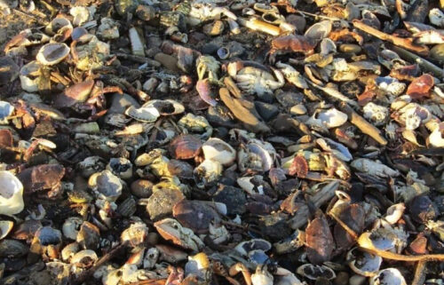 British environmental watchdogs have launched an investigation after thousands of dead sea creatures washed up on beaches in North East England